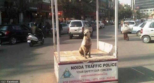 alert-policing