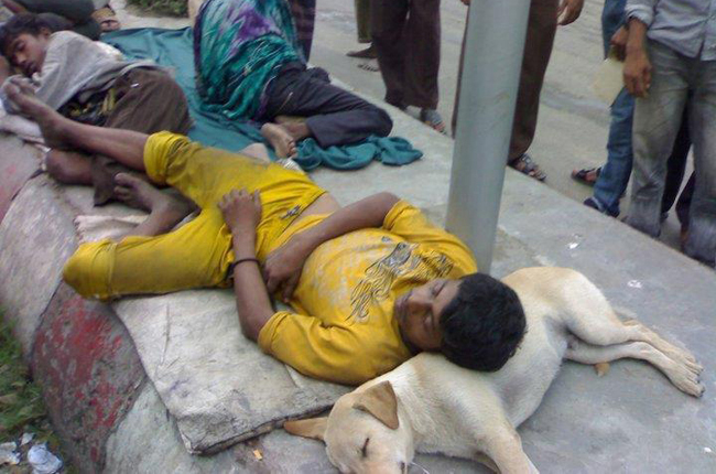doggy-pillow-india