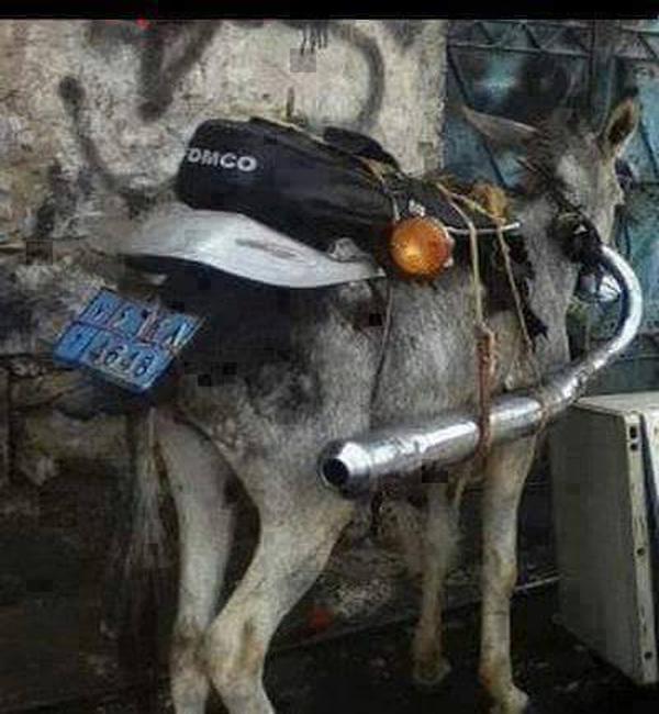 donkey-bike