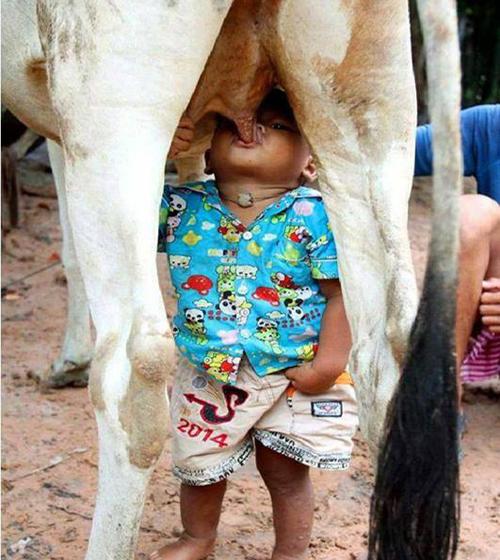 milky-boy