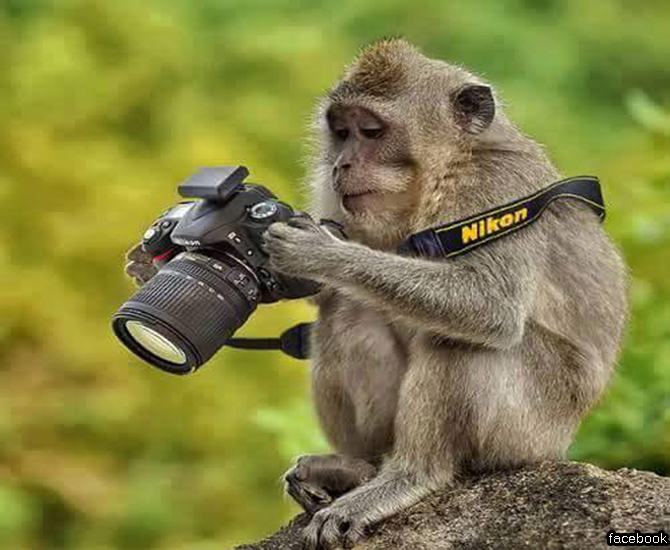 monkey-photographer