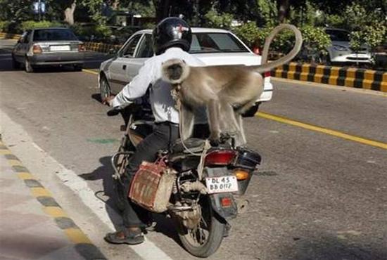 monkey-ride