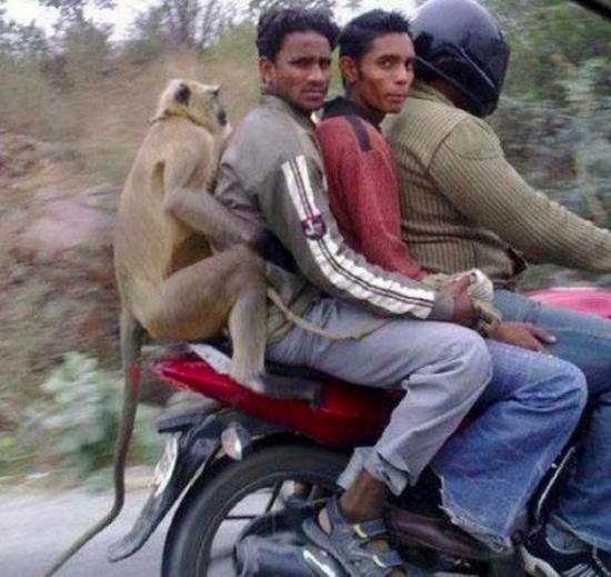 pillion-riding