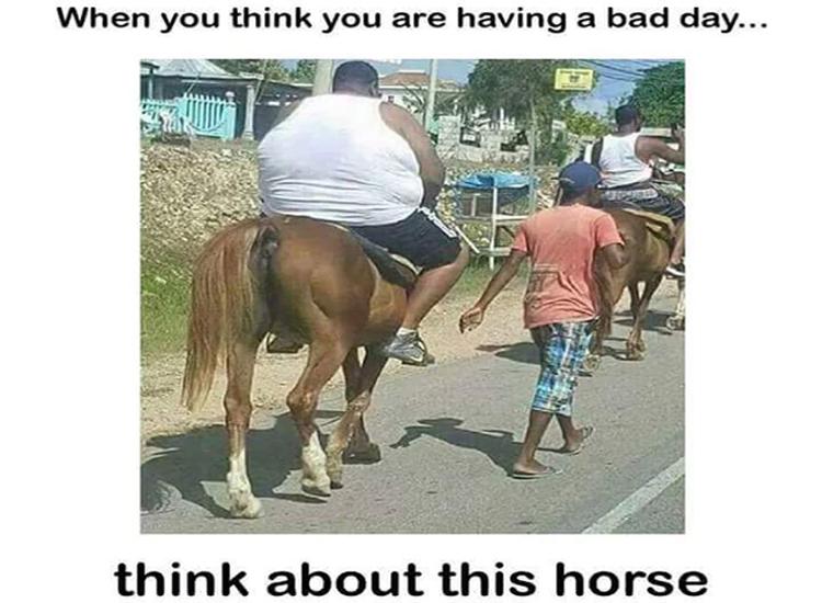 poor-horse