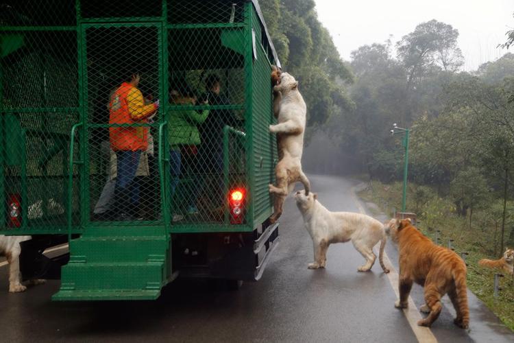sightseeing-animals