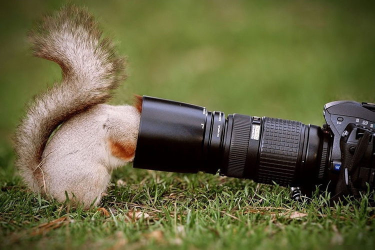 squirrel-taking-picture