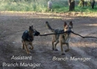branch-manager-his-assistant