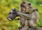 monkey-photographer