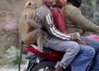 pillion-riding