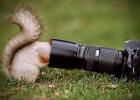 squirrel-taking-picture