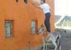 donkey-platform