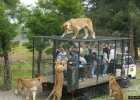 zoo-for-animals