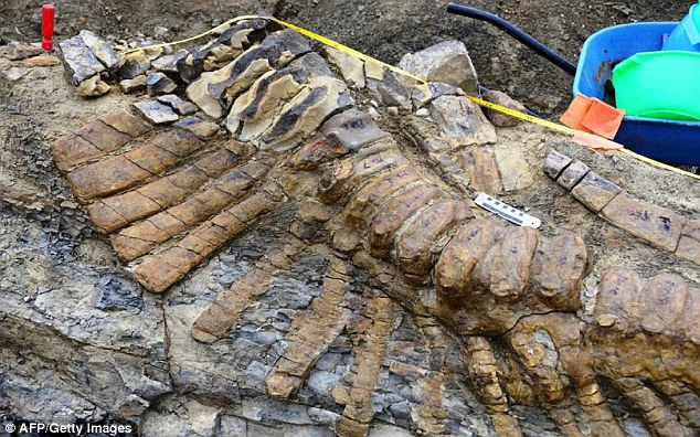 Dinosaur tail found in Mexico that is 72 million years old