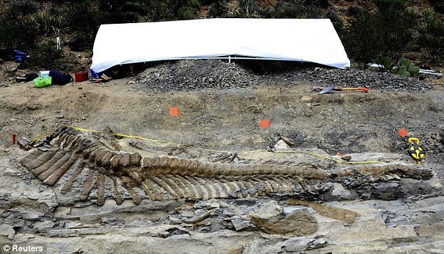 Dinosaur tail found in Mexico is said to be 72 million years old