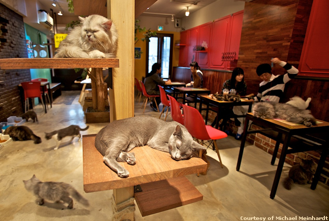 A Cat Cafe in Japan