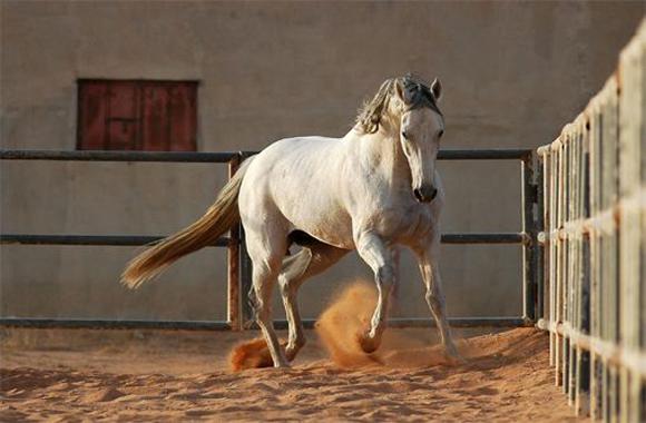 Horse - a file photo