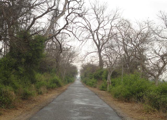 Road to the Keoladeo Bird Sanctuary