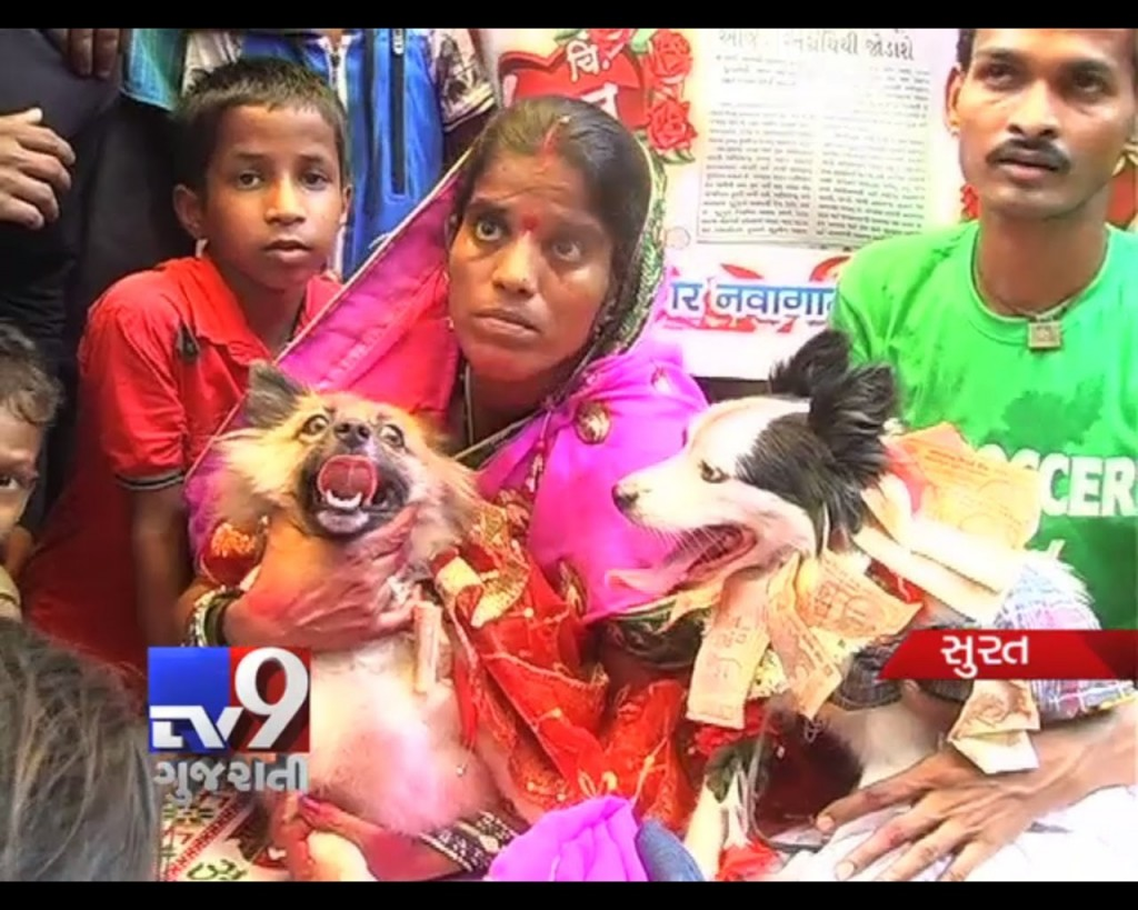 Dogs love story in India: The two pets married in style in Surat city