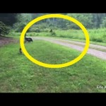 Elusive creature Bigfoot caught on camera by American vacationer