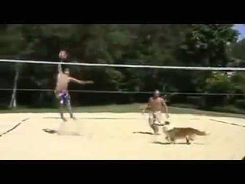 Dog player!