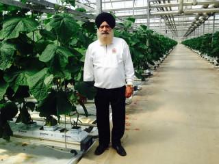 Paramjit Singh Minhas in his cucumber greenhouse near Toronto.