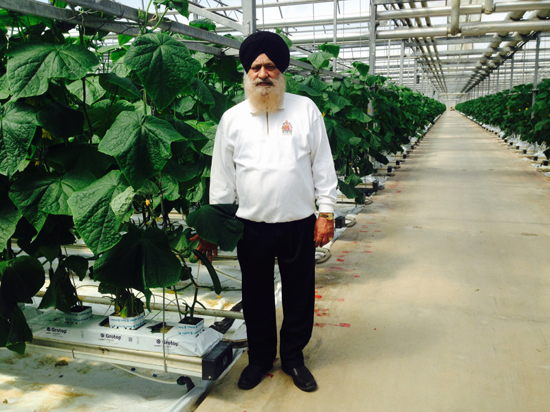 How Singh became cucumber king in Canada
