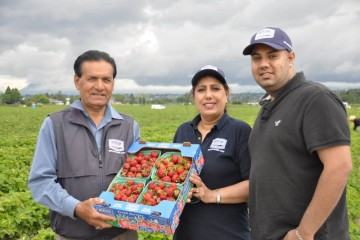 Farmer Gurpal Birak (left) with his wife and son showing their strawberry produce on their farms.